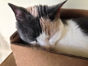 Lizzie in her favorite spot for sleeping.
